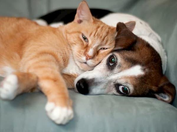 Телец — гороскоп для кошек