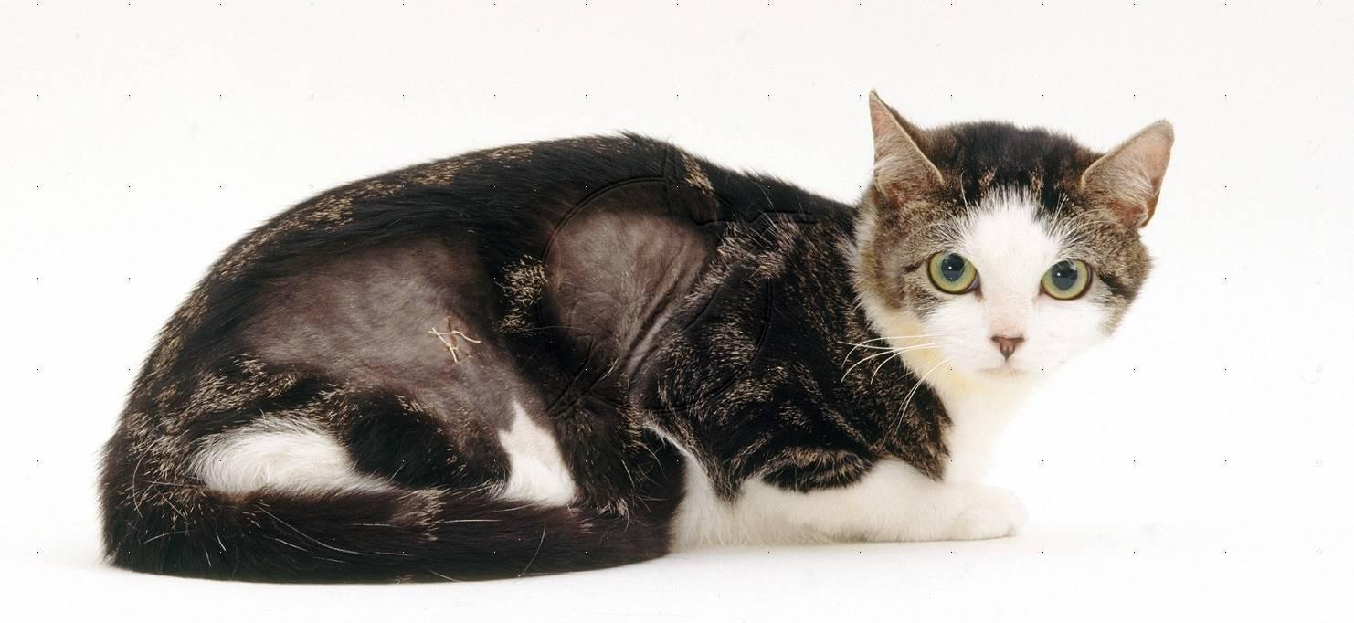 Рахит у кошек и котят: симптомы и лечение