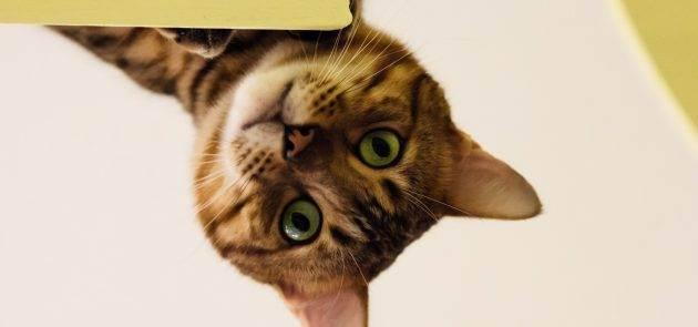 """Аптечка для кошек — питомник мейн-кунов """"lilium"""""""
