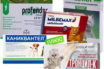 Лечение аллергии у кошек • аллергия и аллергические реакции