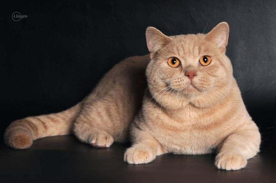 Как назвать котенка мальчика по цвету и породе?