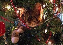 Кошка и новый год