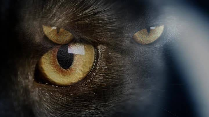 Почему нельзя смотреть слишком долго кошке в глаза: приметы и наука