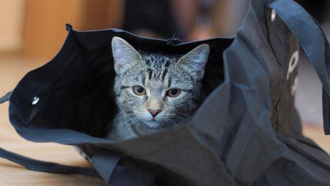 Первые дни котенка в новом доме: проблемы адаптации
