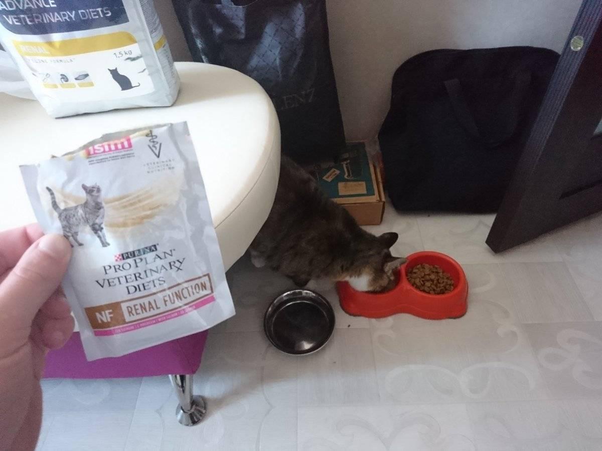 Диабет у кошек: признаки, симптомы, лечение, диета и основы питания