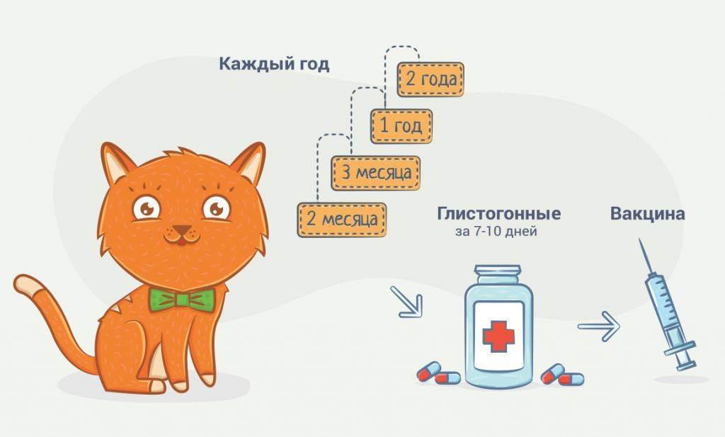 Глистогонные средства для кошек и котят