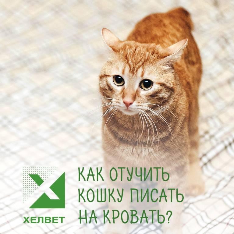 Кот гадит на диван: как отучить, как избавиться от запаха