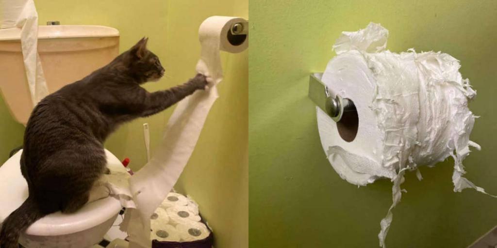 Как отучить кота метить территорию в доме   zoosecrets