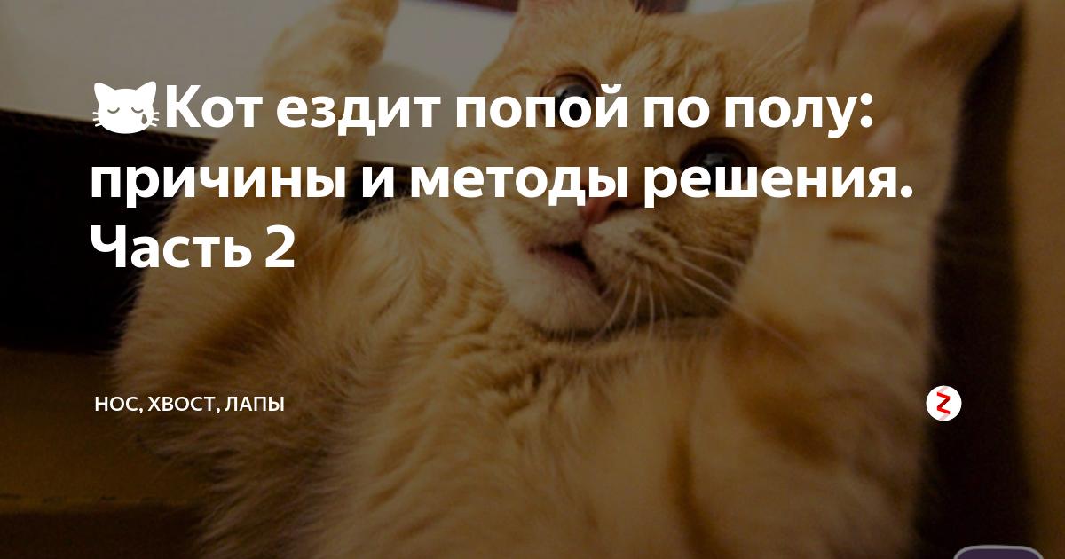Котенок ездит попой по полу. причины, по которым кошка ездит на попе и катается на спине. котенок ездит на попе что это значит если глистов нет