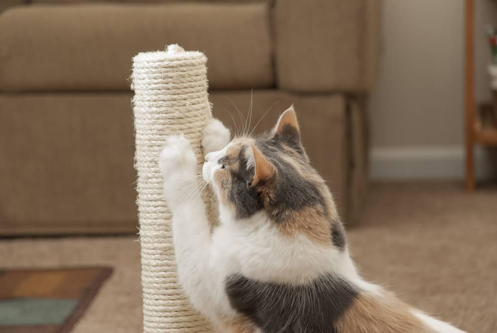 Как отучить кота драть обои и портить стены?