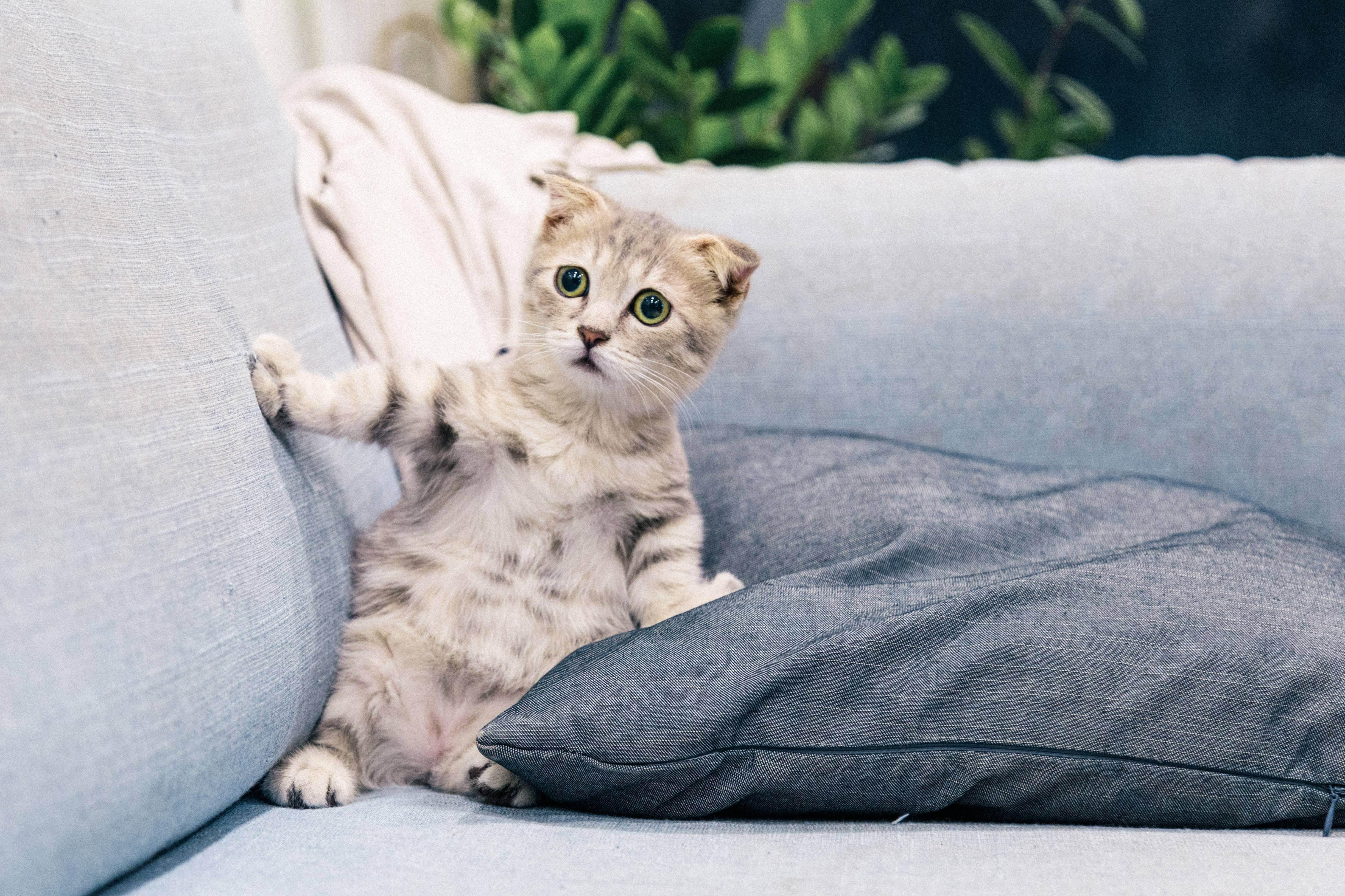 Зачем нужны кошки? в чем их польза и предназначение?