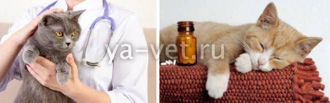 Воспаление легких у кошек симптомы и лечение - муркин дом