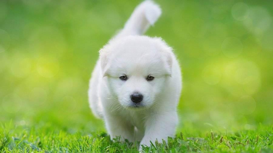 Как уговорить родителей купить собаку: практические советы