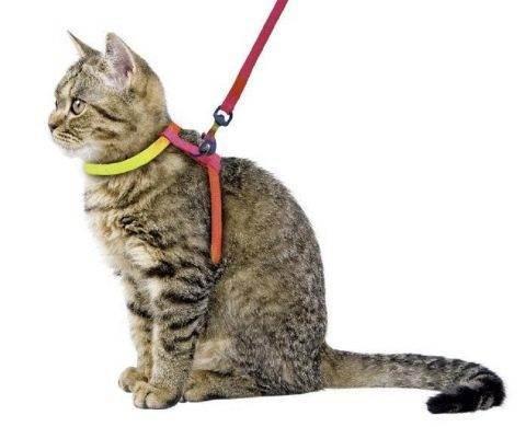 Как приучить кота к шлейке? советы эксперта