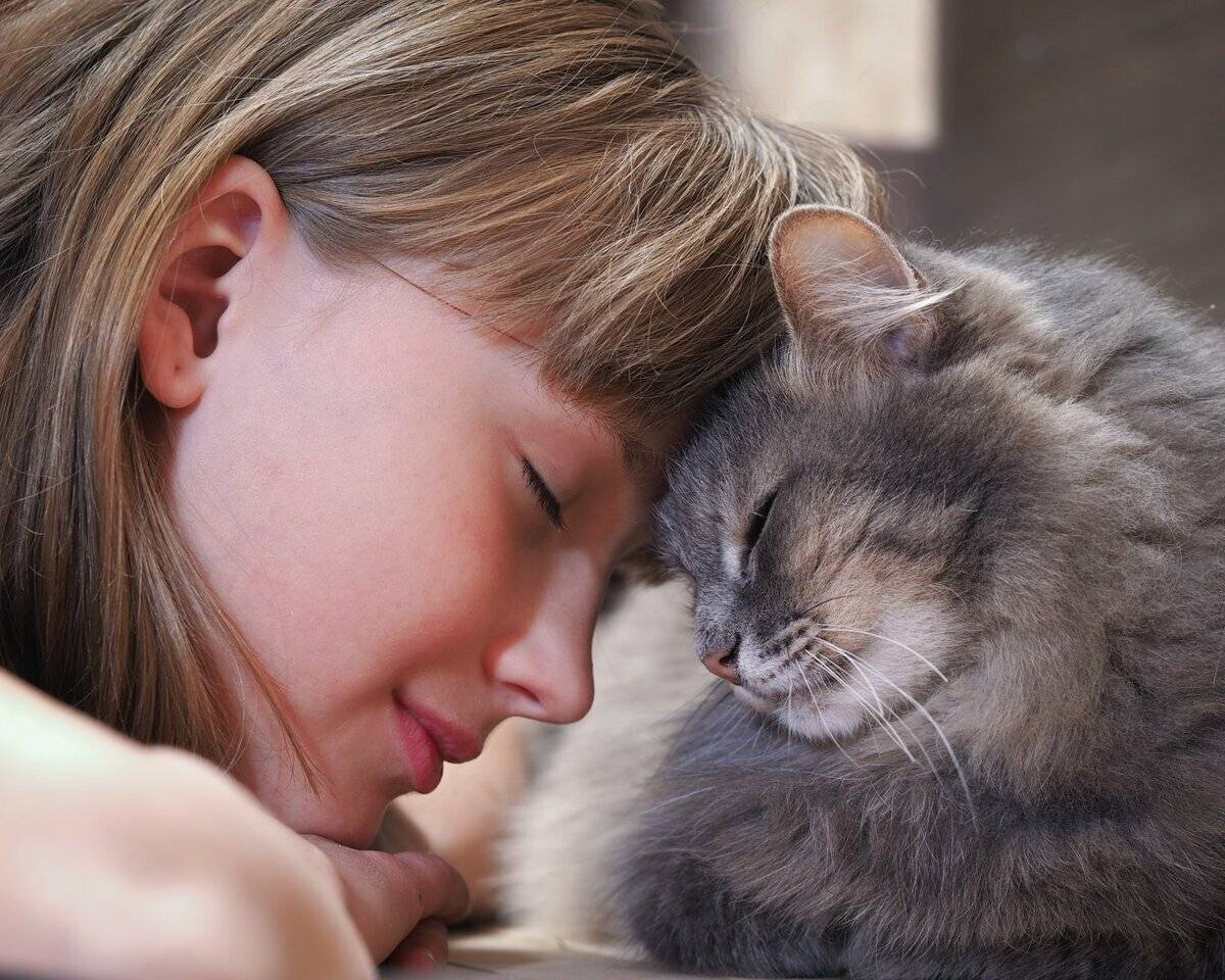 Как кошки проявляют любовь и каких людей любят – удивительные факты