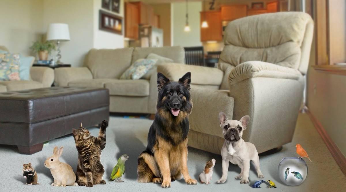 Взрослая кошка в новом доме – как помочь с адаптацией? приучение кошки к новому дому привыкание кошек к новым хозяевам - новая медицина