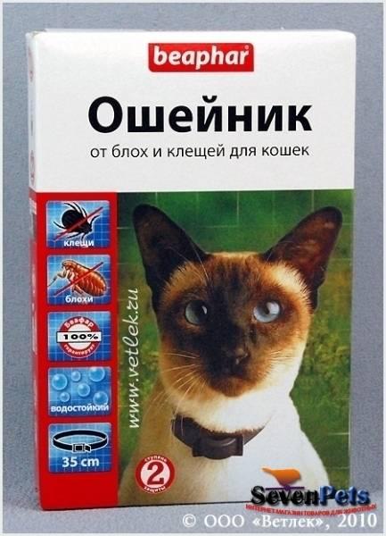 У кошки блохи? народные средства – лучшие помощники