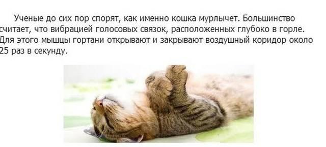 Топ 34 интересных фактов о кошках