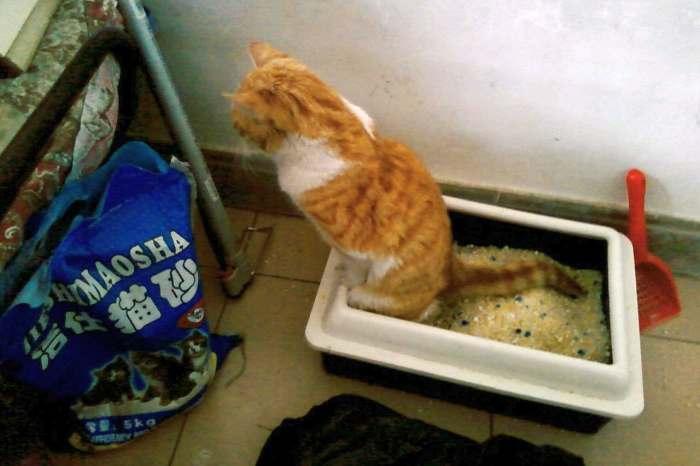 Температура у кошки: нормы и отклонения, как измерить и сбить жар в домашних условиях