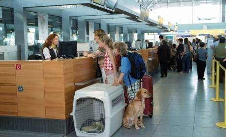 Правила перевозки животных авиатранспортом