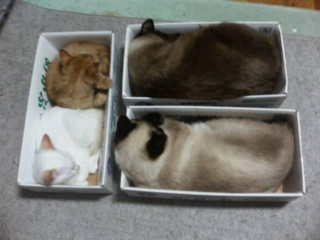 Сколько спят кошки