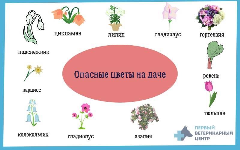 Опасные продукты для кошек, как избежать риска - puirna.ru
