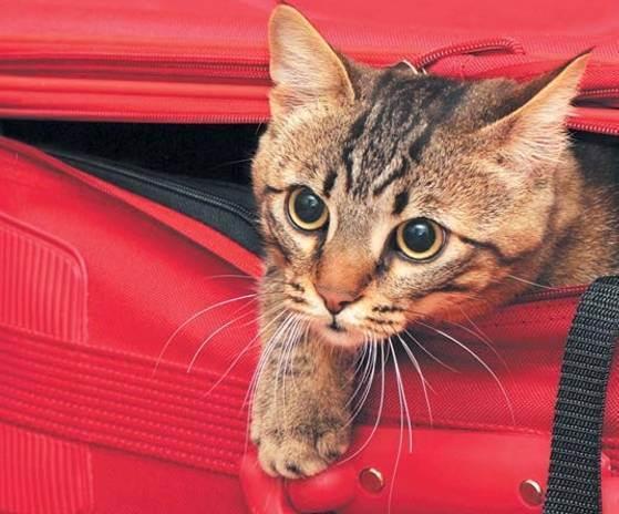 Чем нужно кормить кота и кошку в домашних условиях