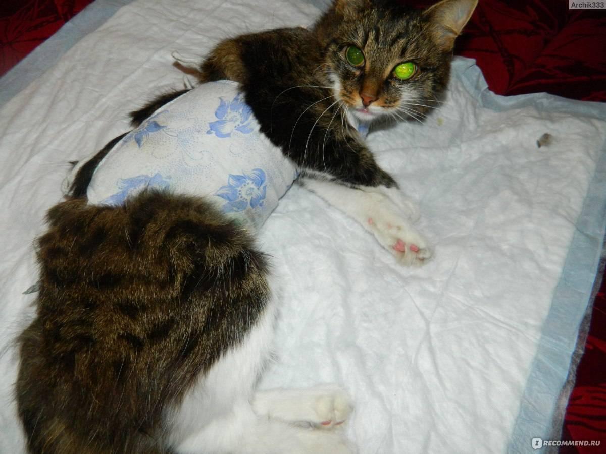 Почему кошка после стерилизации много спит и вялая? - zhivomag