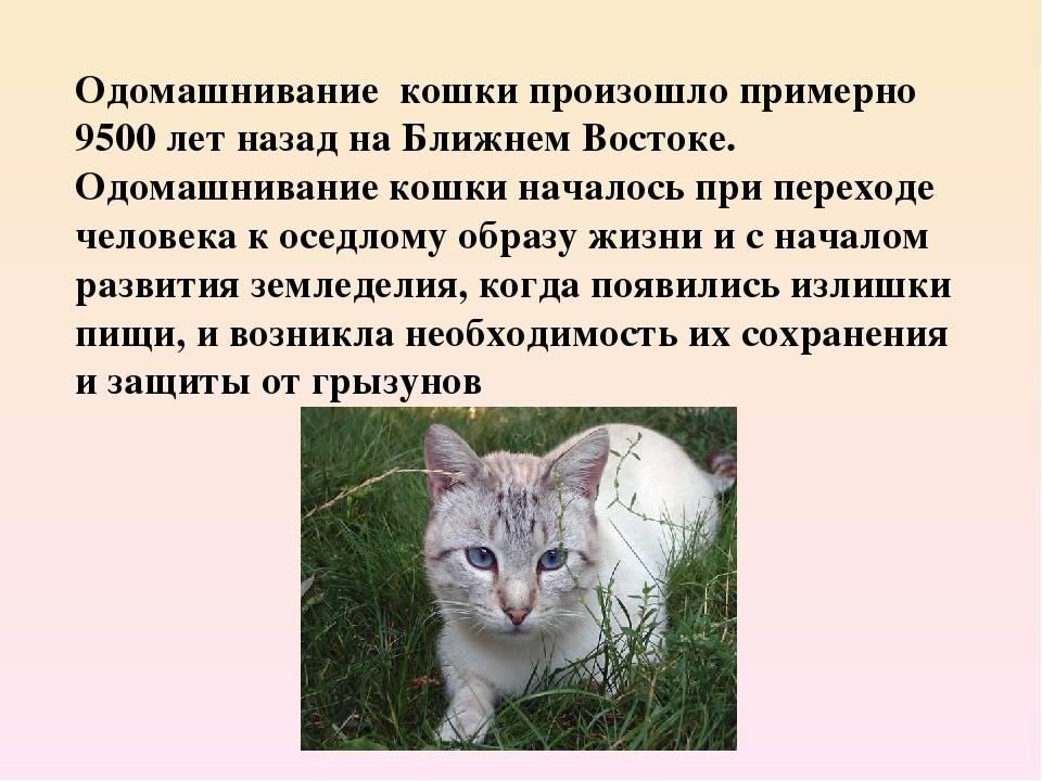 Версии о происхождении кошек и их пути к дружбе с человеком