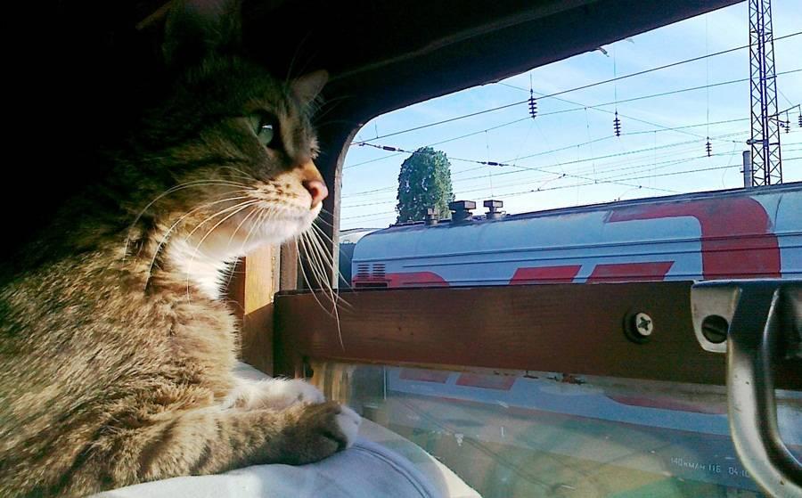 Перевозка кошек в поезде по россии ржд - правила и советы по транспортировке