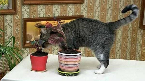 Почему кот ест землю: причины странного поведения почему кот ест землю: причины странного поведения