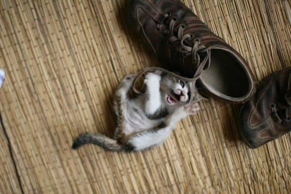 Почему кошка гадит в обувь? как отучить кошку писать в обувь?