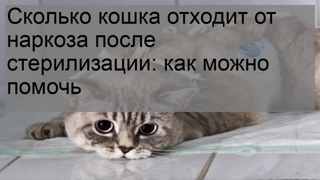 Сколько по времени отходит наркоз после кастрации у кота