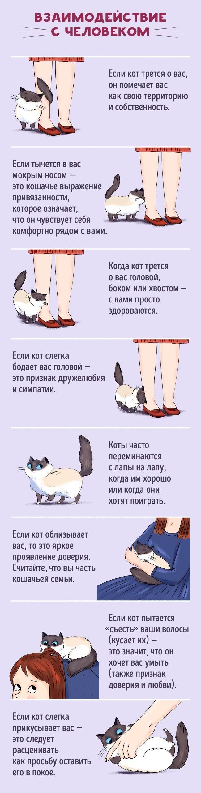 Как наладить связь с кошкой: 11 шагов