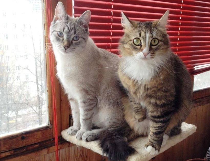 Как помирить кошек: рассматриваем основательно