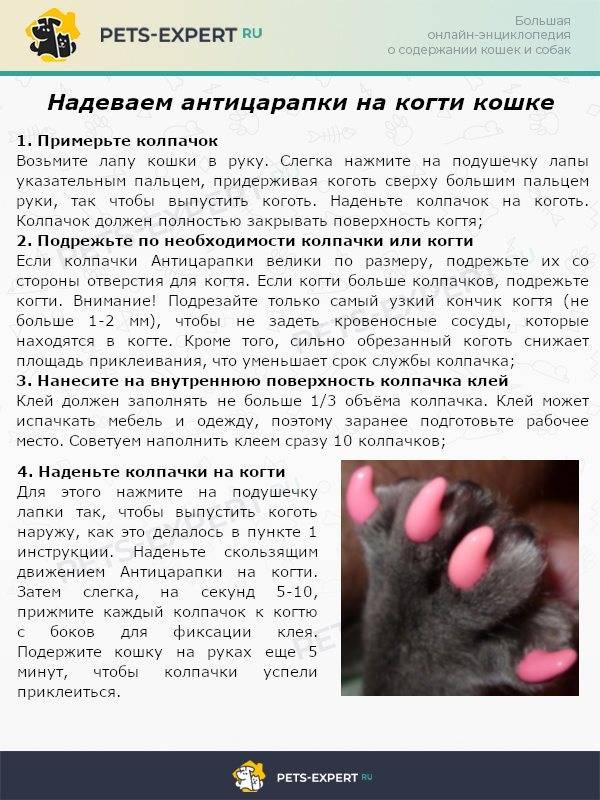 Болезни когтей у кошек: воспаление, обламывание или врастание, симптомы и методы лечения, уход за когтями