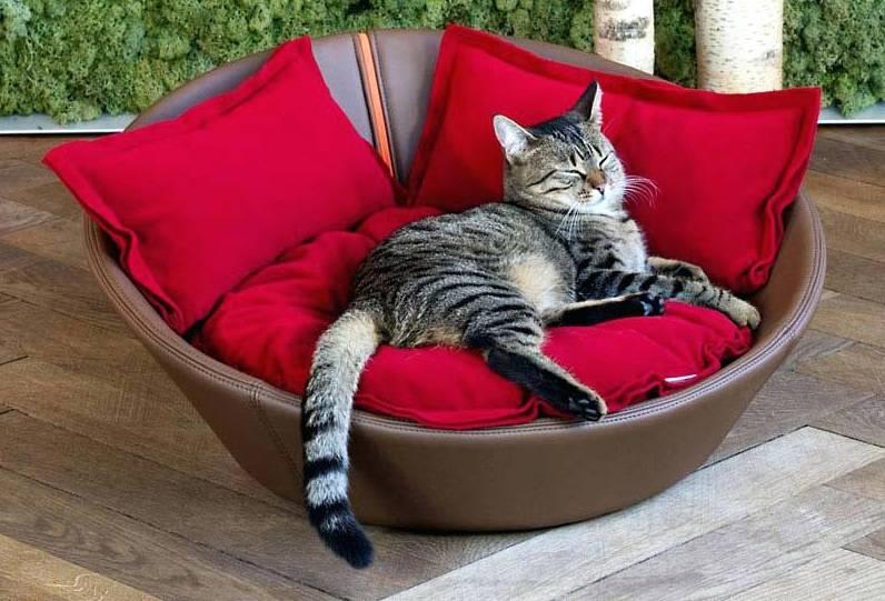 Как приучить кошку к домику или лежанке и заставить спать ночью на своем месте?