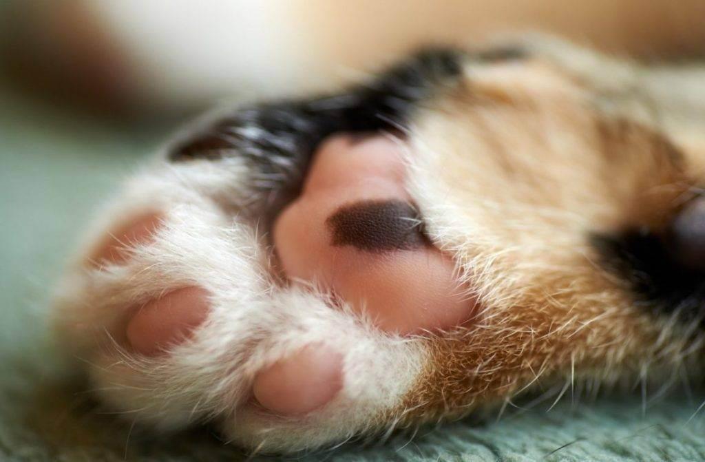 Как проводят удаление когтей у кошек и стоит ли это делать