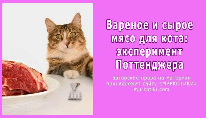 Как правильно переводить кошку на другой корм?