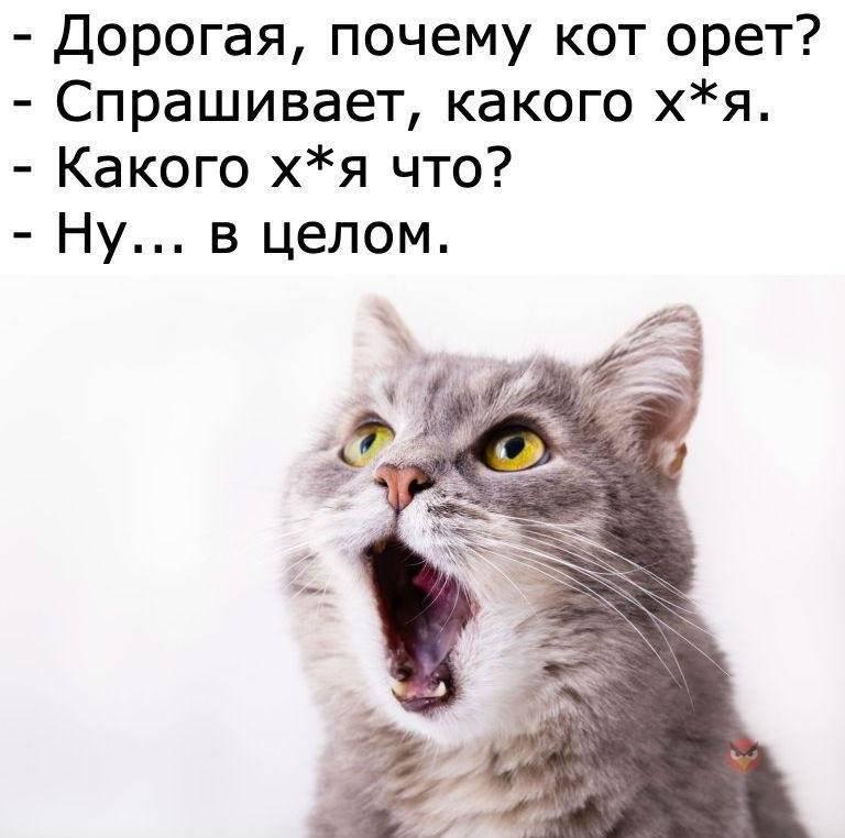 Что делать, если кот орёт по ночам?