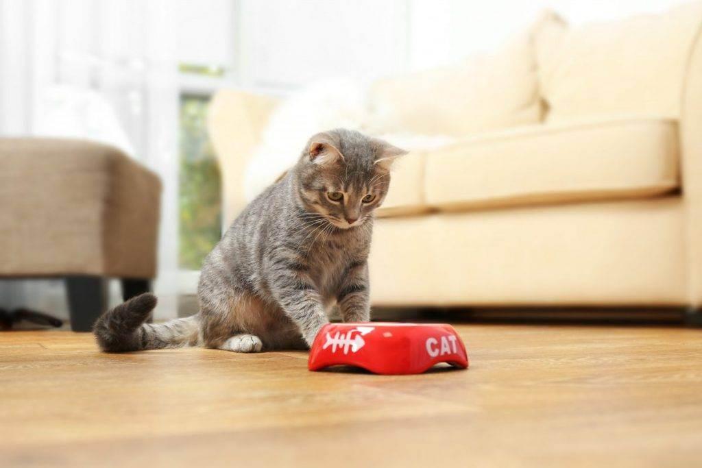 У кошки пропал аппетит - 3 причины и что делать