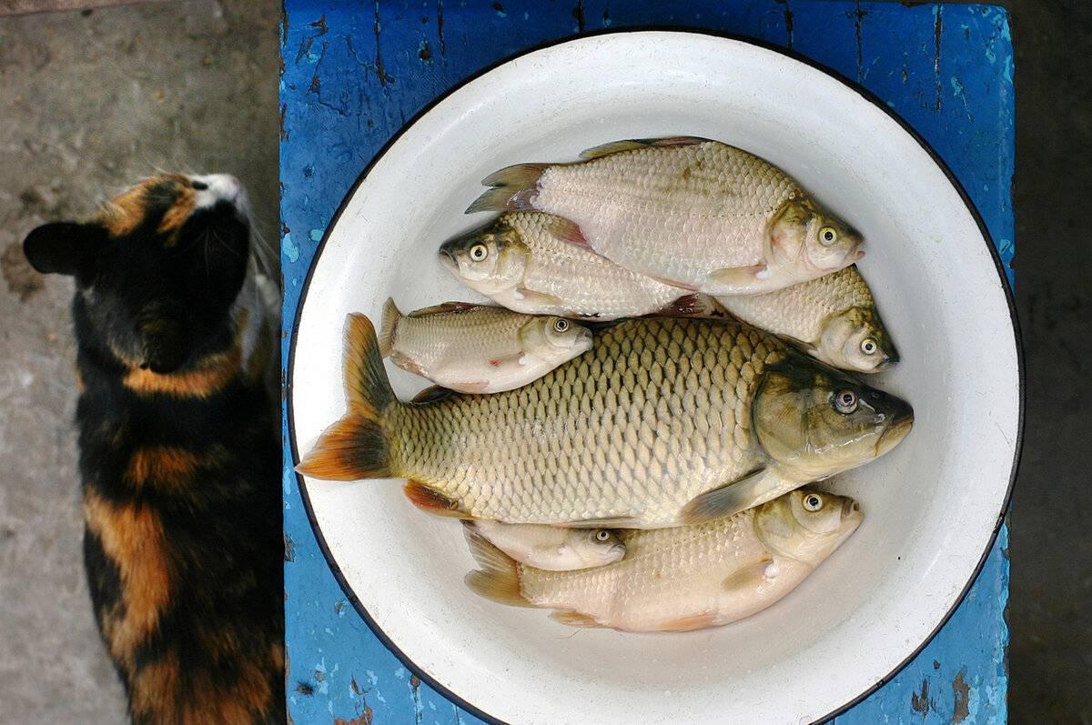 Можно ли кормить кошку рыбой?
