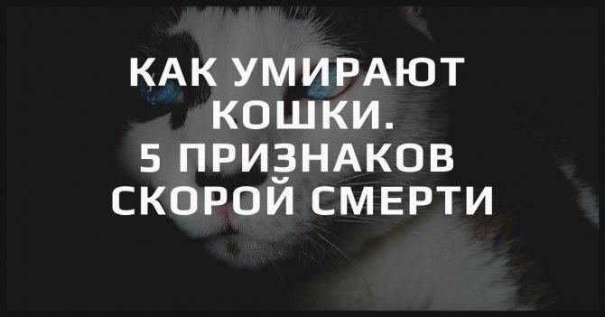 Почему кошки уходят из дома   перед смертью, умирать