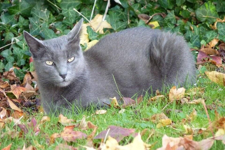 К чему появляется котенок дома: приметы и поверья о кошках, котах и котятах