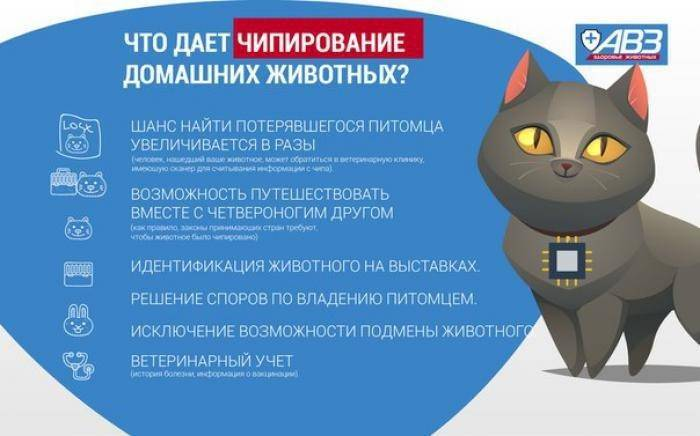 Чипирование кошек: 110 фото идентификации и внесение в международную базу