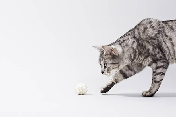 Аллергия на котячу шерсть