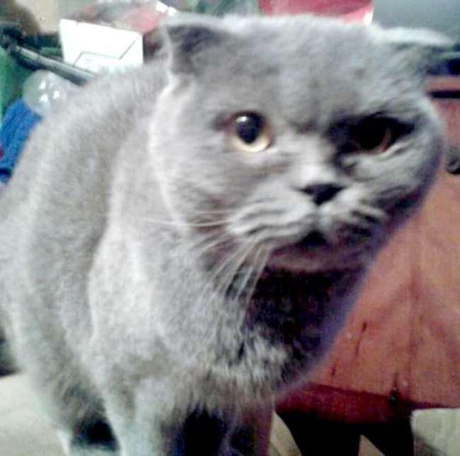 Как узнать, что кошка здорова: 6 признаков здоровой кошки