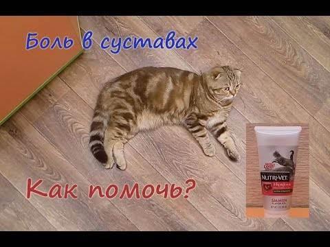 Здоровье и заболевания шотландских кошек