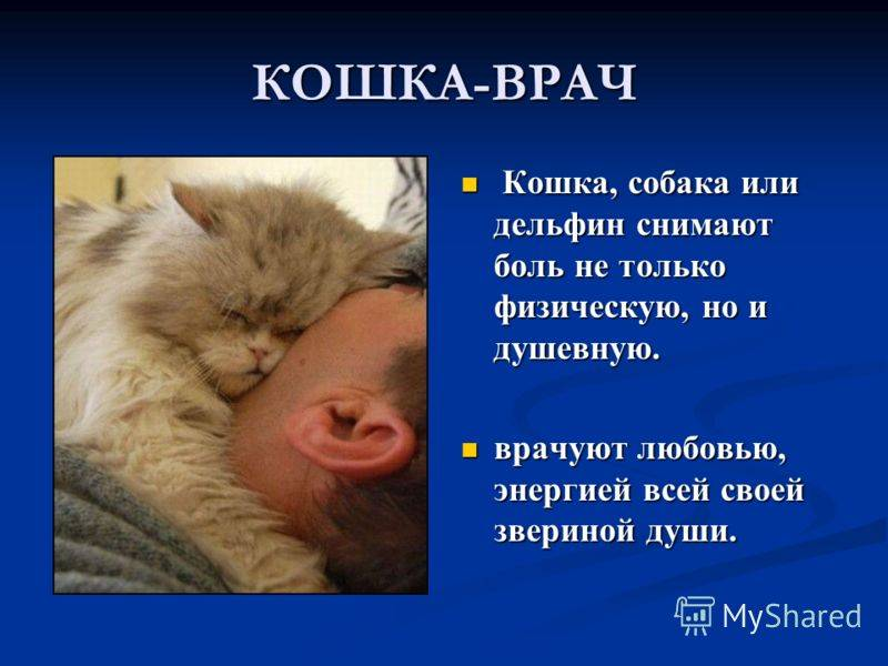 Польза домашних животных для человека  — fertime.ru