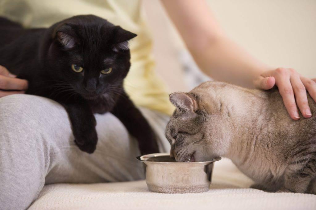 Почему у кошки нет аппетита: причины, лечение плохого аппетита